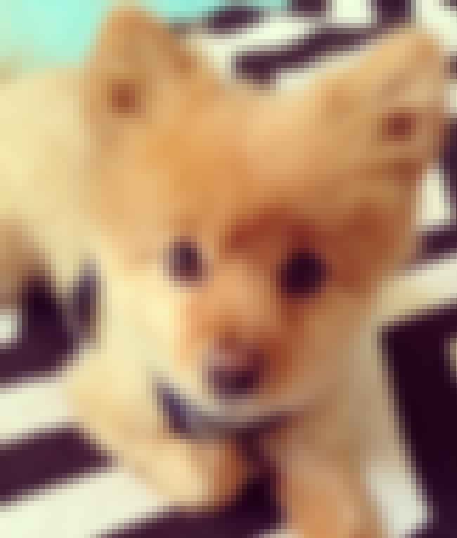 I AM As Soft As I Look! is listed (or ranked) 2 on the list The Cutest Dogs of Instagram