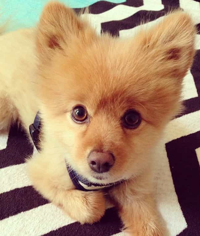 I AM As Soft As I Look! is listed (or ranked) 1 on the list The Cutest Dogs of Instagram