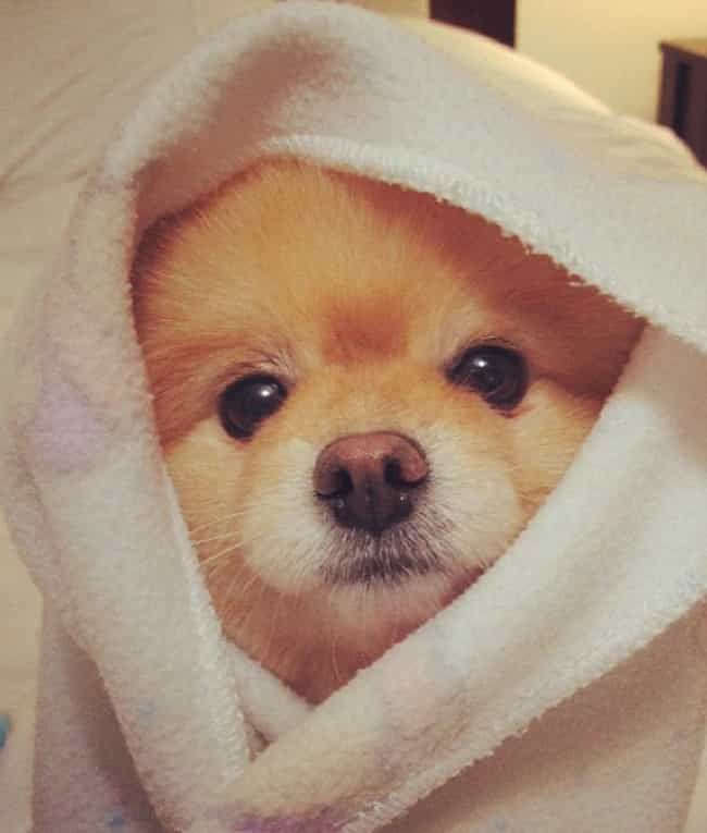 No, I Am Not Snuggles the Bear is listed (or ranked) 3 on the list The Cutest Dogs of Instagram