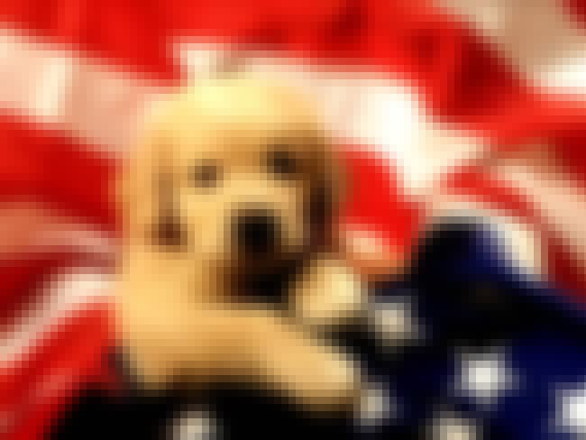 Puppy Patriotism is listed (or ranked) 2 on the list The 41 Cutest Pictures of Patriotic Pets