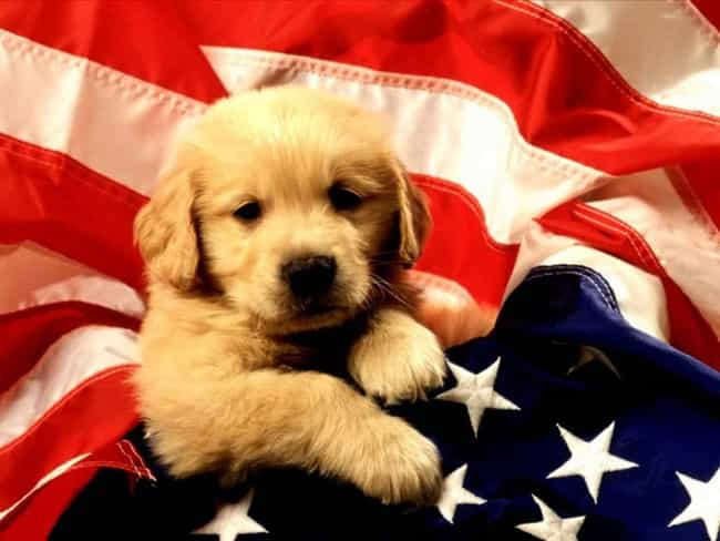 cutest patriotic animals and pets list of patriotic animal pictures
