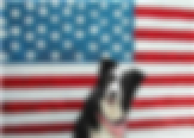 What Are We Celebrating Again? is listed (or ranked) 1 on the list The 41 Cutest Pictures of Patriotic Pets