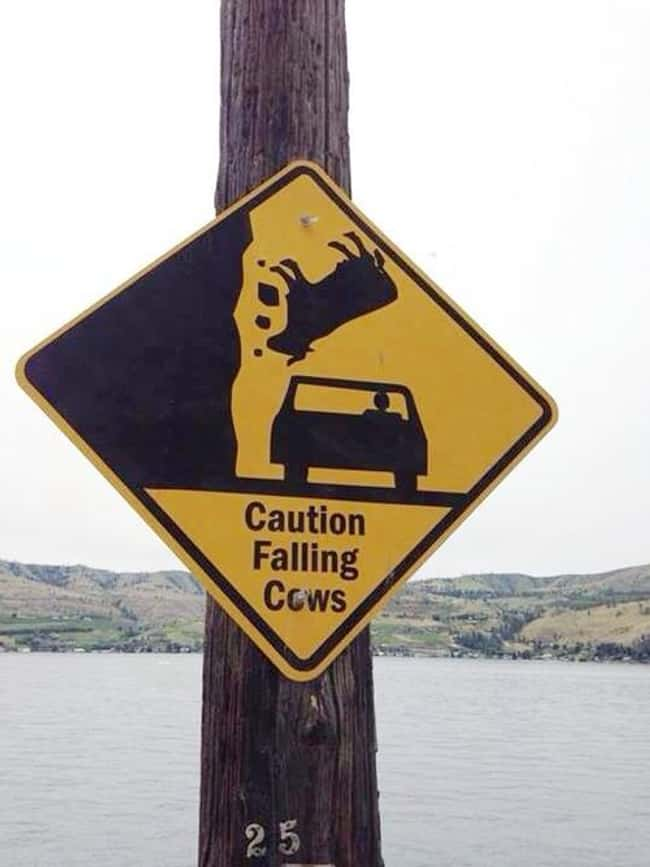 Suicidal Cows is listed (or ranked) 30 on the list The 50+ Most Hilarious Signs