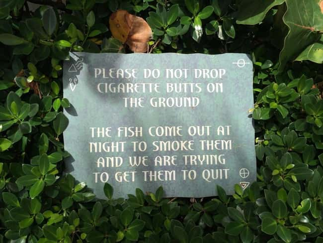 Second Fin Smoke is listed (or ranked) 16 on the list The 50+ Most Hilarious Signs