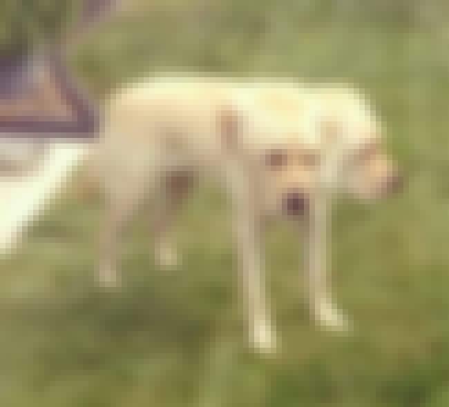 We Adopted A Rescue Cerebus is listed (or ranked) 3 on the list 52 Horrifying Panoramic Photo FAILs