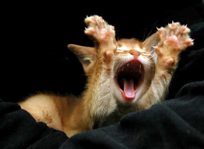 Big Stretch is listed (or ranked) 2 on the list 31 Pictures of Cute Animals Yawning
