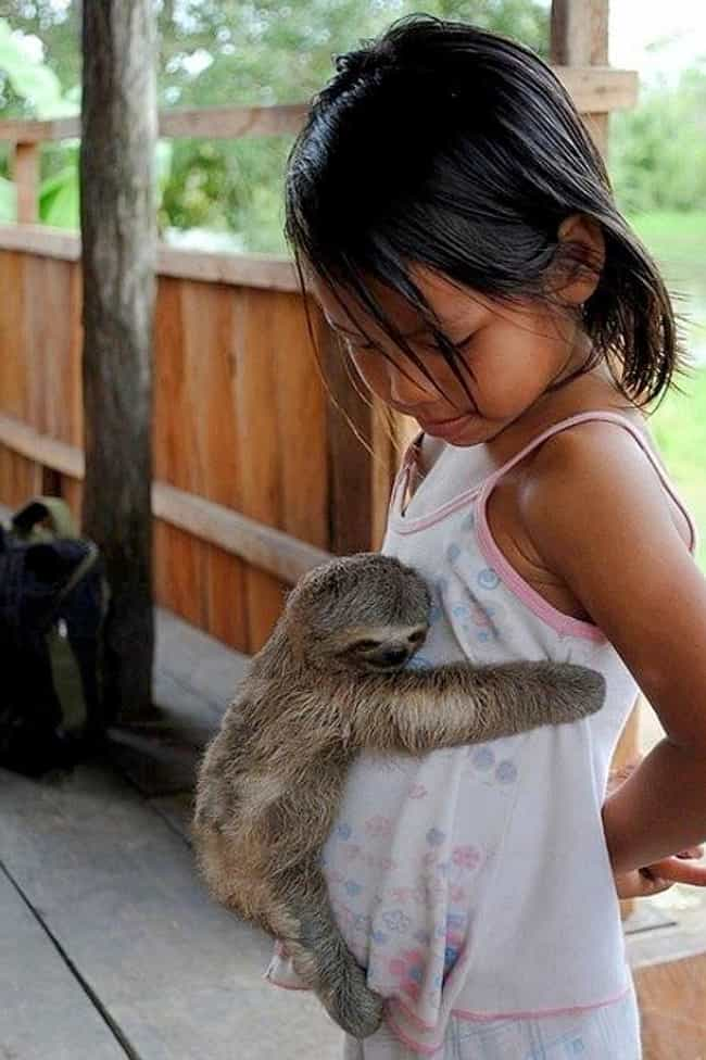 Girl's Best Friend is listed (or ranked) 4 on the list 20 Adorable Pictures of Sloths