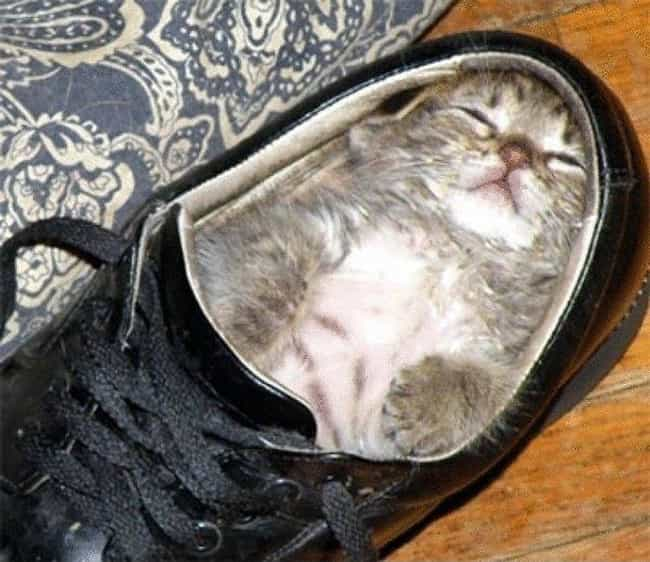 There Was a Tiny Kitten Who Li... is listed (or ranked) 1 on the list 28 Cats Sitting in Funny Spaces