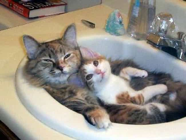 Cuddle Puddle is listed (or ranked) 3 on the list 28 Cats Sitting in Funny Spaces