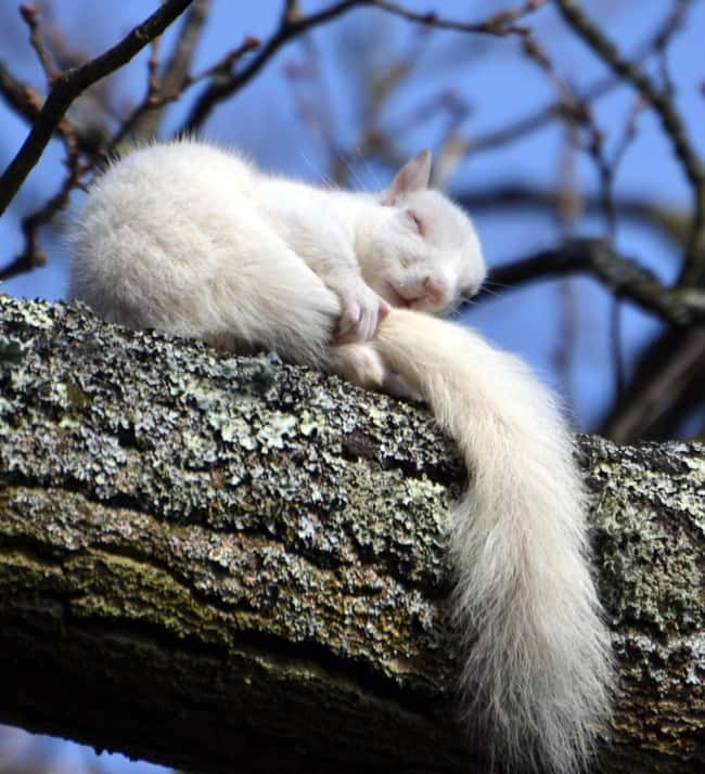 Squirrel is listed (or ranked) 28 on the list 38 Incredible Albino (and Leucistic) Animals