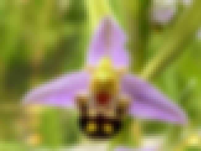 This Orchid is listed (or ranked) 2 on the list 60+ Everyday Objects That Look Really Happy