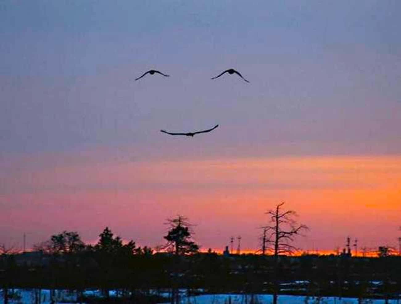 These Birds is listed (or ranked) 1 on the list 60+ Everyday Objects That Look Really Happy