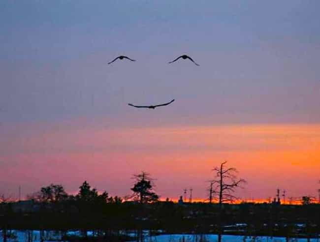 These Birds is listed (or ranked) 2 on the list 60+ Everyday Objects That Look Really Happy