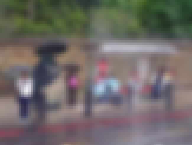 BLAME IT on The RAIN is listed (or ranked) 3 on the list The Funniest Bus Stop Photos Ever
