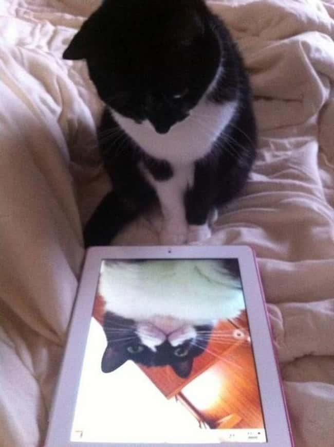 this cat doesn and 39 t know her angles stupid cat photo u1?w=650&q=60&fm=jpg - Les 20 selfies les plus ratés de tous les temps