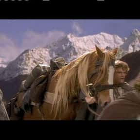 Bill the Pony is listed (or ranked) 23 on the list The Best Lord of the Rings Characters
