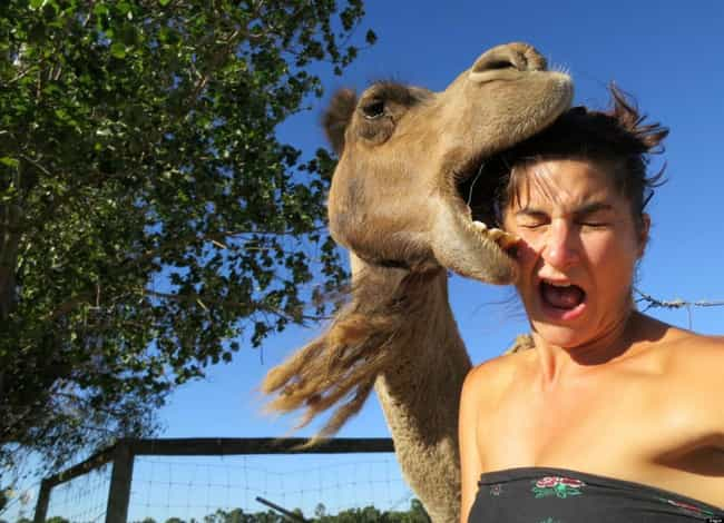 A Camelfie. The Kind Of Selfie... is listed (or ranked) 2 on the list The Biggest Selfie FAILs In Internet History
