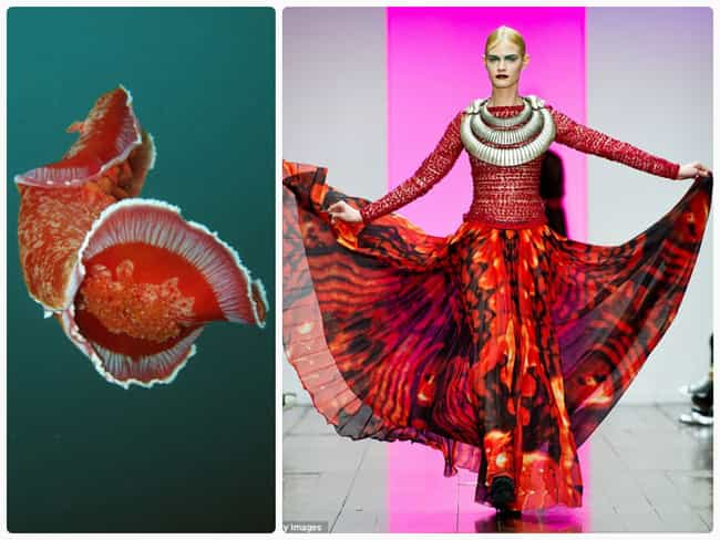 Spanish Dancer is listed (or ranked) 2 on the list The Most Beautiful High Fashion Nudibranchs