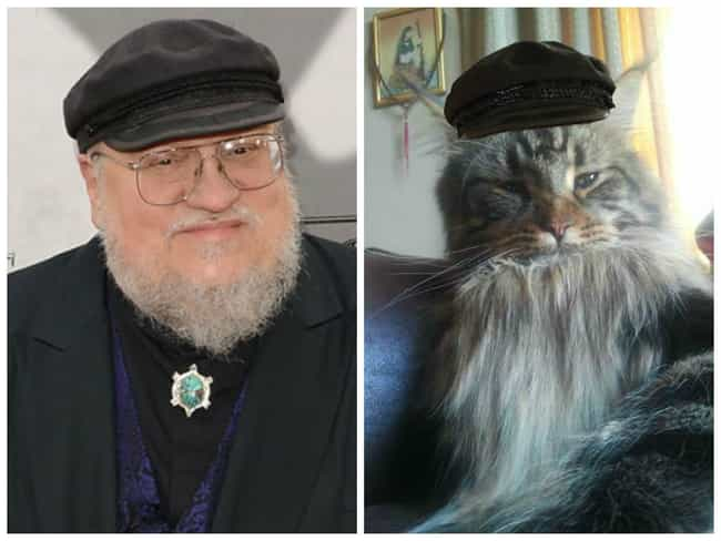 George RR Martin is listed (or ranked) 4 on the list 20 Cats Who Look Like GoT Characters