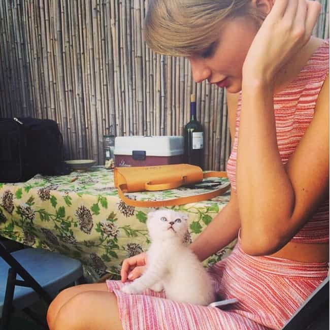 Cute Kitten Captures is listed (or ranked) 3 on the list The Best of Taylor Swift's Instagram