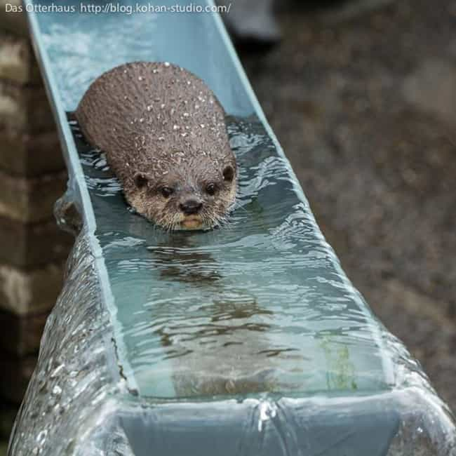 Otters are playful and love wa... is listed (or ranked) 4 on the list 20 Facts That Will Make You Fall in Love with Otters