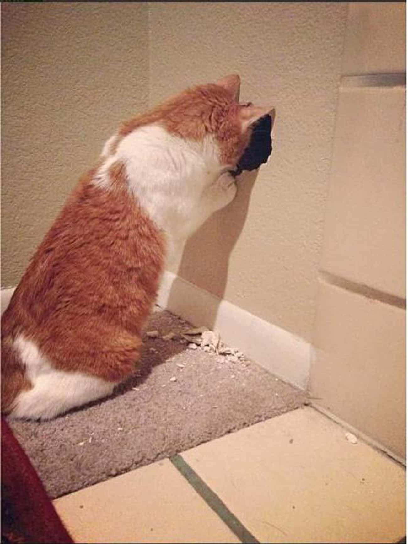 The Hole In The Wall is listed (or ranked) 3 on the list 24 Things These Cats Are Looking At