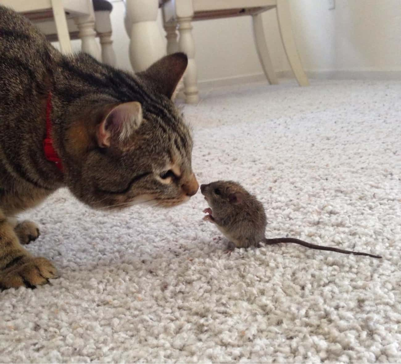 This Tiny Animal is listed (or ranked) 4 on the list 24 Things These Cats Are Looking At