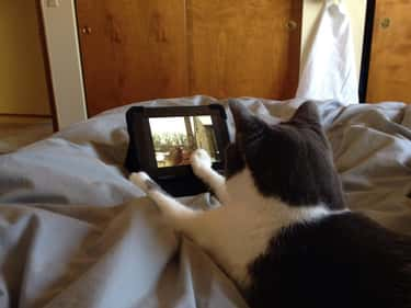 Her Tablet is listed (or ranked) 6 on the list 24 Things These Cats Are Looking At