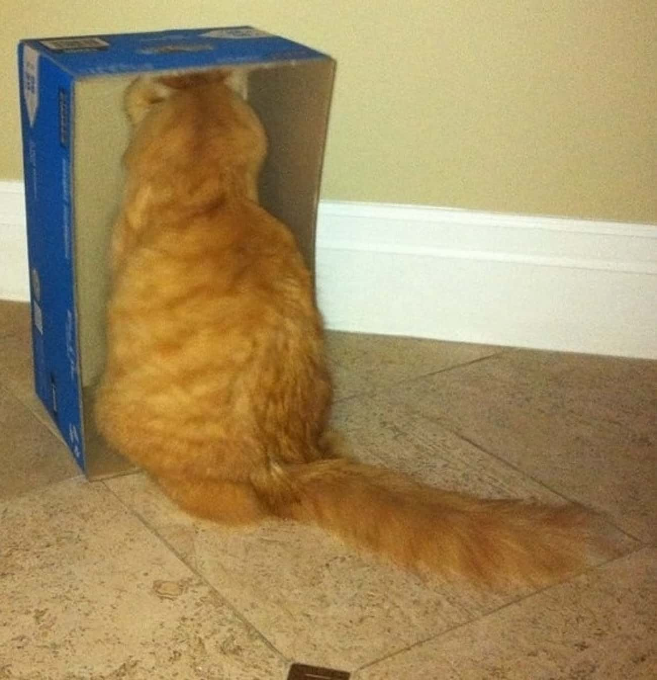 The Inside Of This Box is listed (or ranked) 1 on the list 24 Things These Cats Are Looking At