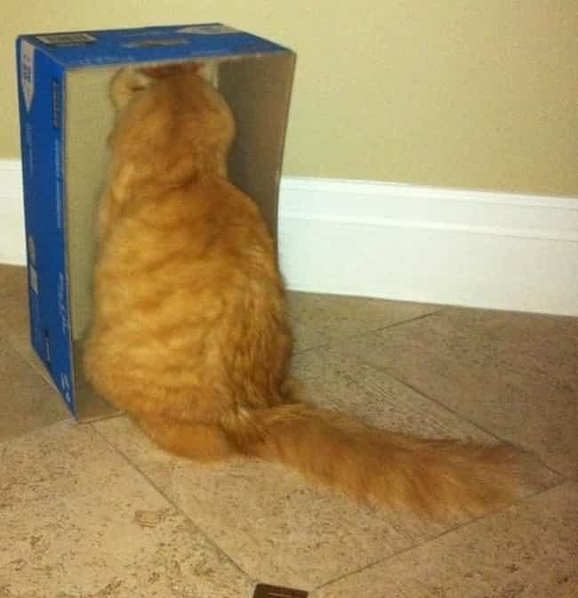 The Inside of This Box is listed (or ranked) 1 on the list 44 Things These Cats Are Looking At