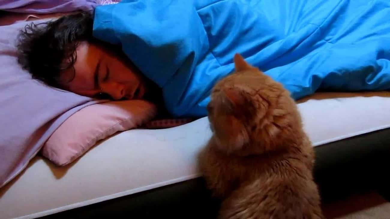 You, While You're Sleeping is listed (or ranked) 2 on the list 24 Things These Cats Are Looking At