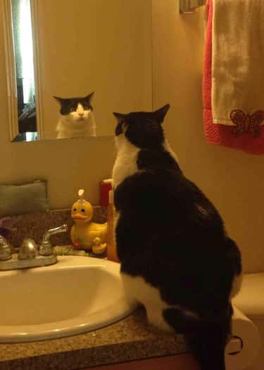 His Reflection is listed (or ranked) 5 on the list 24 Things These Cats Are Looking At