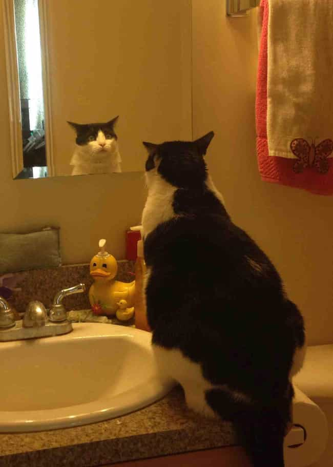 His Reflection is listed (or ranked) 4 on the list 44 Things These Cats Are Looking At
