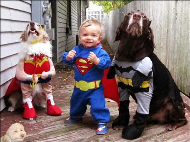 Way Better Than Snyders JLA is listed (or ranked) 1 on the list The Best Pets Dressed as Superheroes