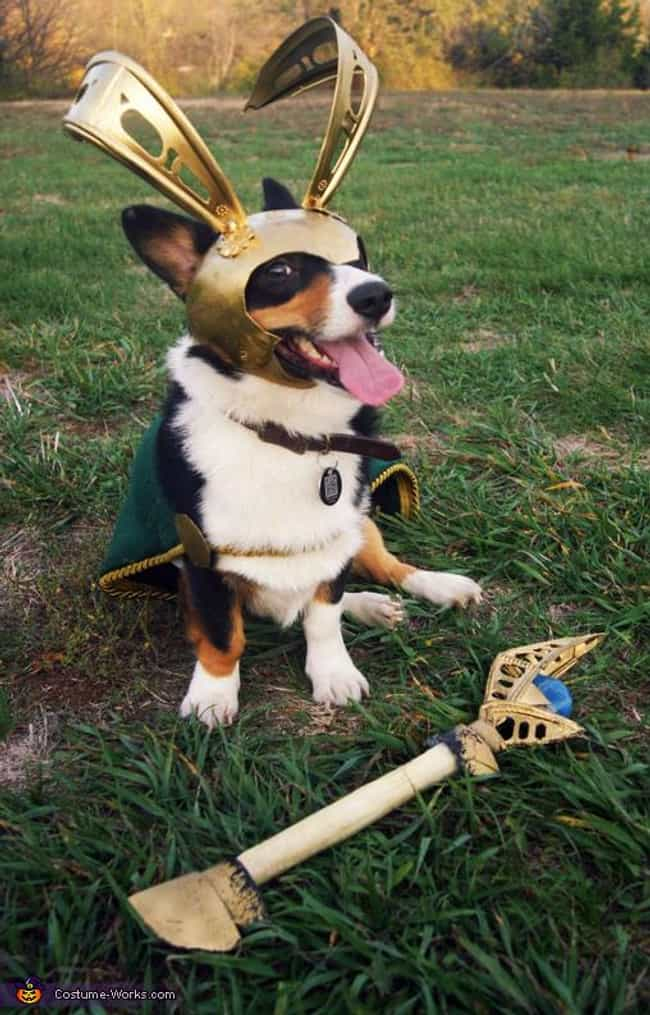 Loki, Dog of Mischief is listed (or ranked) 4 on the list The Best Pets Dressed as Superheroes
