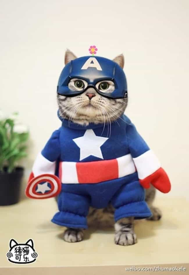 Cat-Tain America is listed (or ranked) 2 on the list The Best Pets Dressed as Superheroes