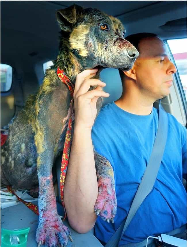 Eldad Hagar is listed (or ranked) 2 on the list Inspirational Stories of Humans Who Advocate for Dogs