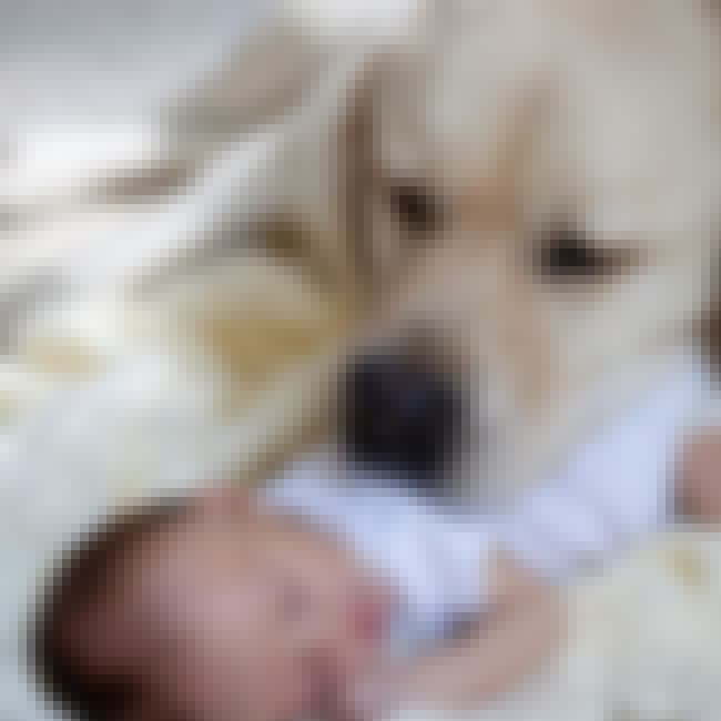 Ruby Rae is listed (or ranked) 4 on the list 17 Incredible Dogs Who Have Saved Babies