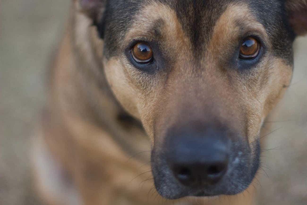 Dogs Can Read Your Face is listed (or ranked) 1 on the list 25 Amazing Dog Facts You Never Knew