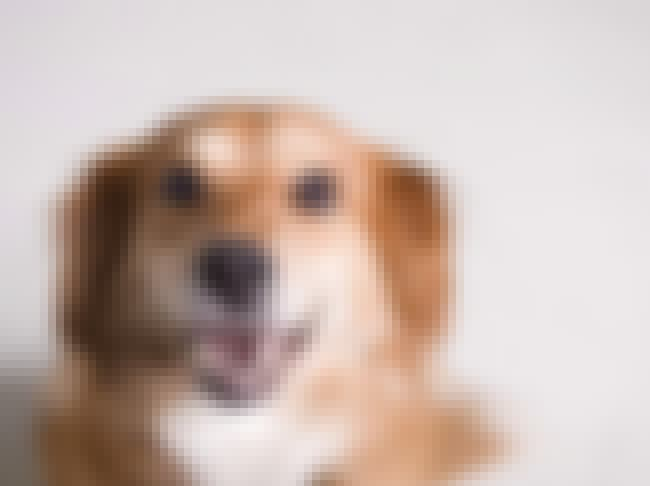 Dogs can read your face. is listed (or ranked) 1 on the list 25 Amazing Dog Facts You Never Knew