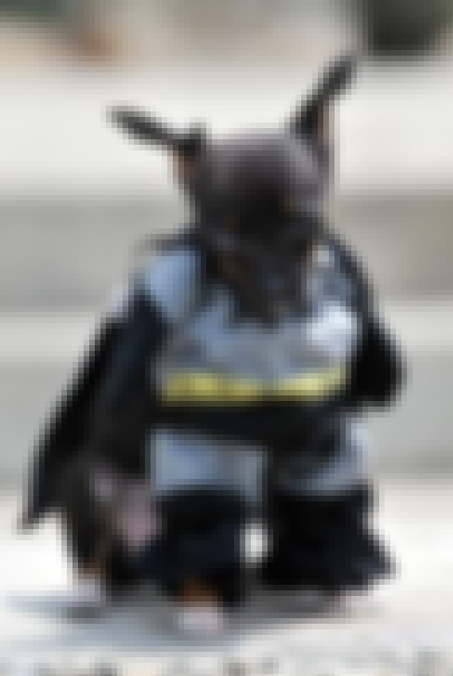 Batman, All Squishy and Frumpy... is listed (or ranked) 7 on the list 31 Unfortunate Pet Halloween Costumes