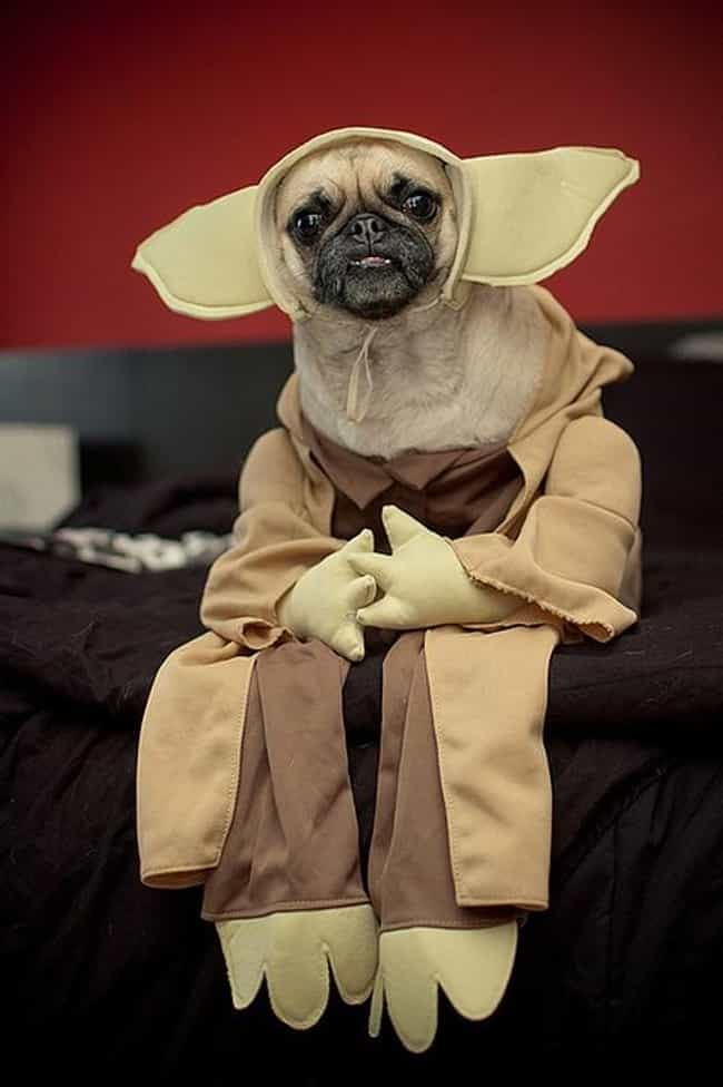 Yoda is listed (or ranked) 1 on the list 31 Unfortunate Pet Halloween Costumes