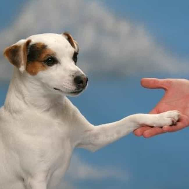 Shake is listed (or ranked) 7 on the list The Easiest Tricks to Teach Your Dog