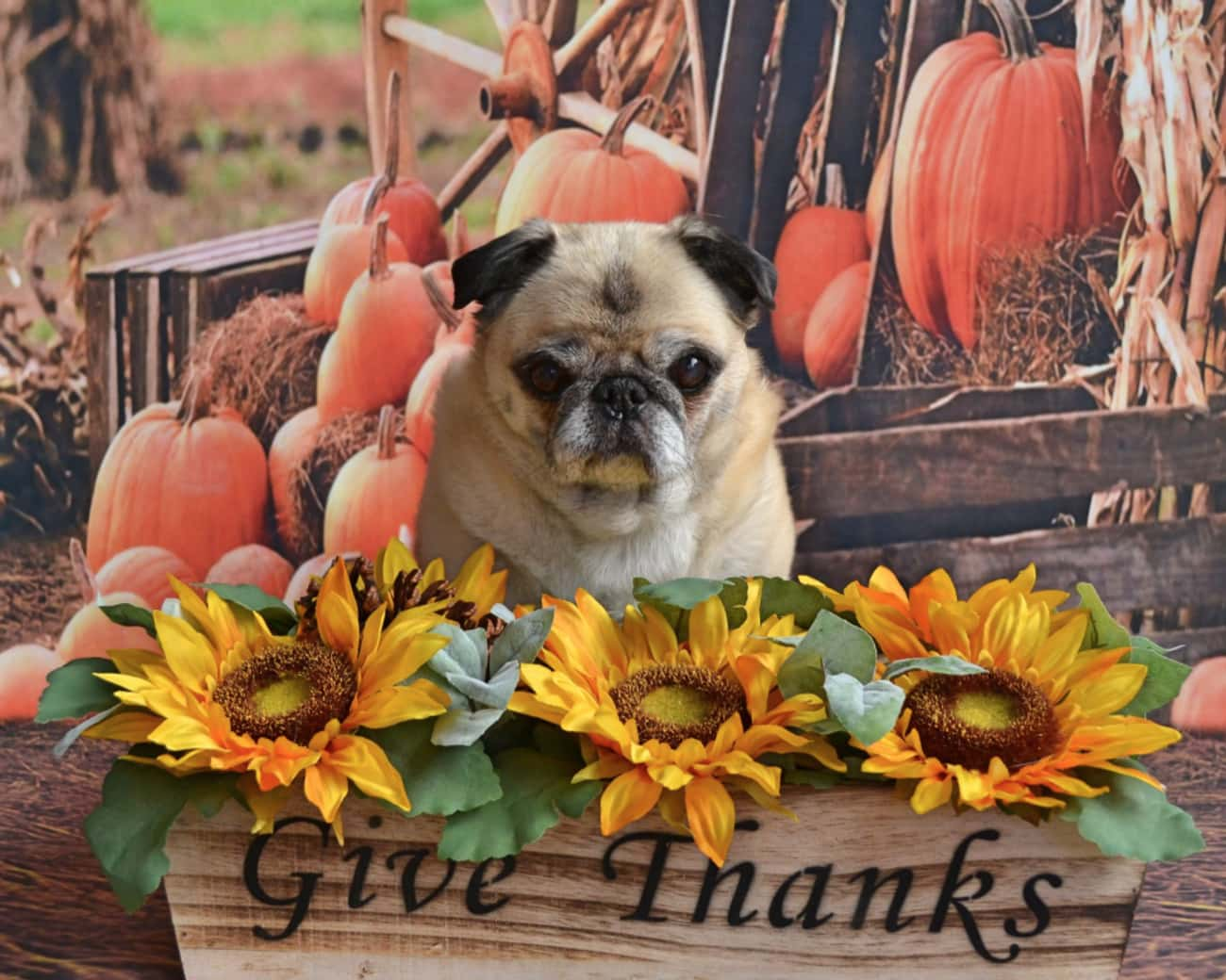 Dining in Gratitude is listed (or ranked) 4 on the list The Biggest Thanksgiving Myths & Legends, Debunked