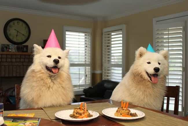 Birthday Dog Pals! is listed (or ranked) 3 on the list 40 Cute Animals Celebrating Their Birthdays