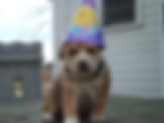 Birthday Puppy #2! is listed (or ranked) 4 on the list 40 Cute Animals Celebrating Their Birthdays