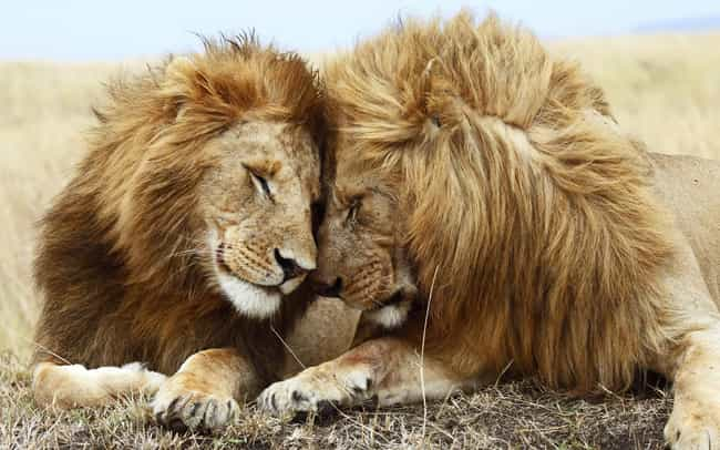 wild animals who have saved humans