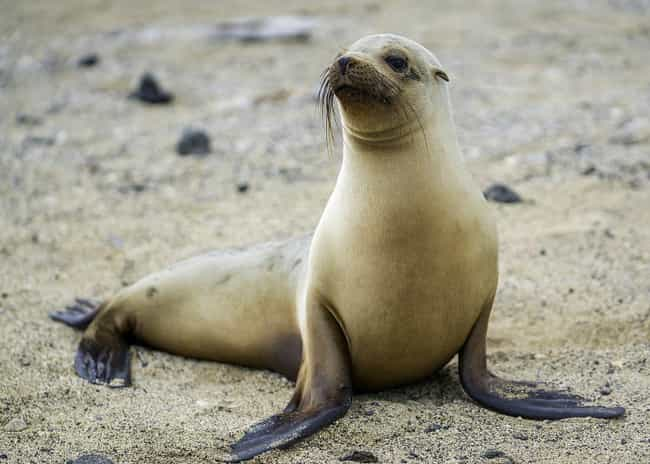 Sea Lion Helps Man Who Jumped ... is listed (or ranked) 4 on the list 15 Times Wild Animals Actually Saved Humans