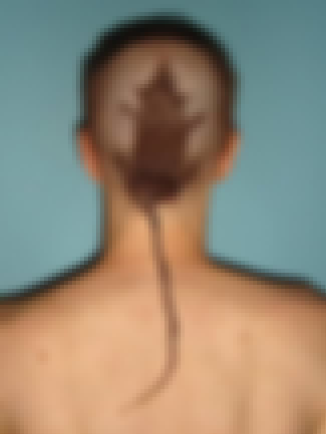 A Literal Rattail That Is More... is listed (or ranked) 1 on the list 50 Hairstyles These People Will Regret Forever