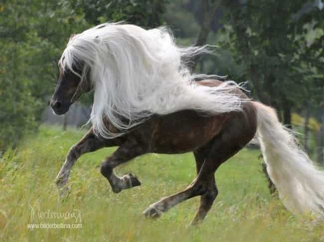 Is This a Pantene Commercial? is listed (or ranked) 2 on the list 34 Animals Having a Better Hair Day Than You
